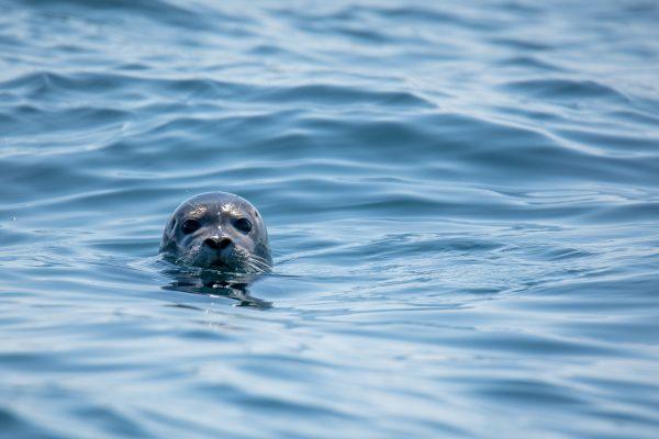 seal-wildlife-woodlands-glencoe-highlands-scotland-2400x1600