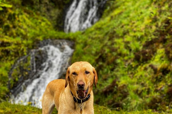 Rosie the dog enjoying dog walks at Woodlands Glencoe pet friendly lodges with hot tubs